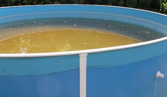Nazelenalá voda v bazénu